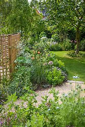 Looking back down the garden from the gravel area. Trellis screen at back of border dividing the garden from the car parking area. Liriodendron tulipifera in the lawn -  tulip tree.