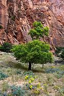 Zion National Park, Utah, USA