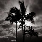 Full moon rising behind palm trees.