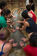 West Indian manatee (Trichechus manatus) <br /> Wildtracks<br /> Manatee Rehabilitation Center<br /> Sarteneja<br /> Belize,<br /> Central America