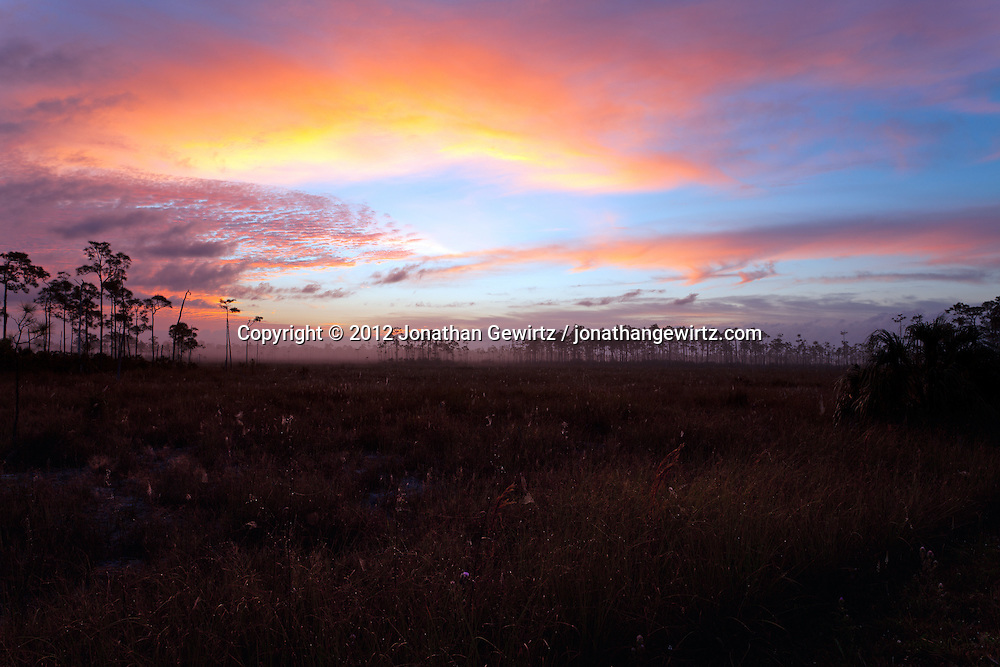 The morning sky lightens over foggy sawgrass prairie near Mahogany Hammock in Everglades National Park, Florida. WATERMARKS WILL NOT APPEAR ON PRINTS OR LICENSED IMAGES.