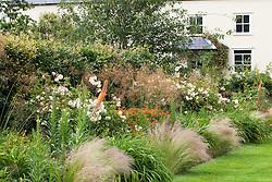 The bronze border at Holt Farm with Eremurus × isabellinus 'Cleopatra', Stipa gigantea, Stipa tenuissima, Hemerocallis 'Stafford', Euphorbia griffithii, Rosa 'Buff Beauty' and Digitalis parviflora