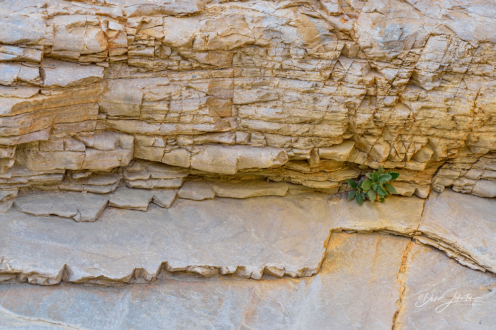 Mosaic Canyon walls with Rock Nettle, Death Valley National Park, California, USA