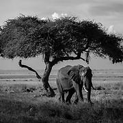 Kenya: Monochrome