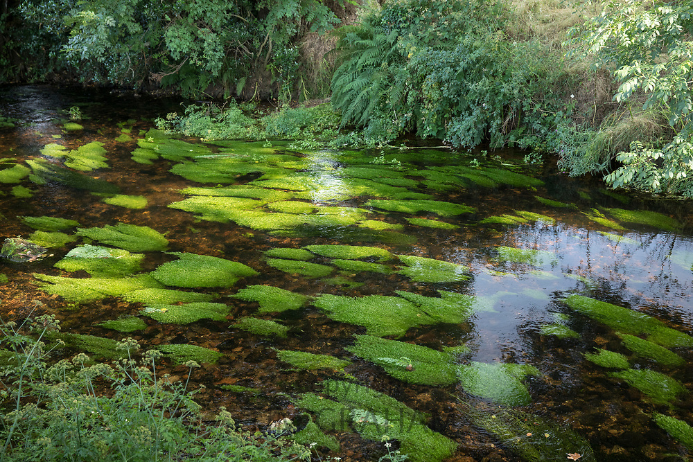 River looking clean, healthy and unpolluted - the River Teign at Chagford in Devon, UK