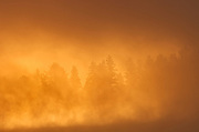 Fog at sunrise in the boreal forest<br />Algonquin Provincial Park<br />Ontario<br />Canada
