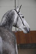 2010-02-tilleman-selectie