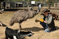 © Licensed to London News Pictures. 28/04/2015<br /> Dave Hill  (SCAR Manager) with Moo the Emu.<br /> Second Chance Animal Rescue (SCAR) in Crockenhill,Kent have just taken delivery of two Emu's. Moo who is male and 3 years old and the smaller Emu Zayla an 8 month old female. both have been rescued from a private property in Dartford,Kent after SCAR received a call for help from the owner.<br /> Bromley Council have placed a 6 month eviction order on the animal rescue chairty to remove sheds and buildings that house rescued animals.<br /> (Byline:Grant Falvey/LNP)