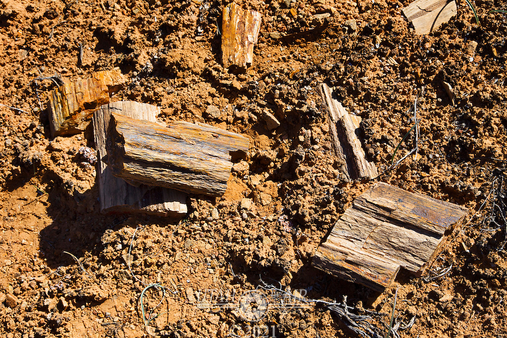 The petrified wood is everywhere at Happy Canyon. Once you learn how to spot it, it's all you see..