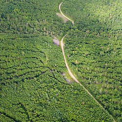 Logging roads on Coburn Mountain in industrial timberland in Maine's Northern Forest.