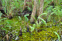 Florida Everglades. Absolutely Beautiful!!!