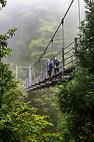 Suspension Bridge at Shiratani Unsuikyo Ravine - a lush nature park containing many of Yakushima island's ancient cedars.  The park offers a network of hiking trails that run along the ravine varying in length from one to five hours long, though many prefer to choose their own routes among the paths. The trails vary in difficulty from basic footpaths to developed paved paths using stone and wood.  One of the main attractions of Shiratani Unsuikyo is a part of the forest that served as the inspiration for the Studio Ghibli animated film Princess Mononoke. Oga Kazuo, the lead artist for the film, spent lots of time here working on sketches for the movie's forests.  Besides the ancient cedar trees, some of them thousands of years old, the continually wet microclimate protects the cedars by enabling them to produce more than usual resin,  It also is an ideal climate for moss, which grows everywhere here.