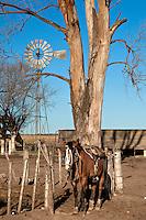 CABALLO CON MONTURA ATADO A UN ALAMBRADO, ARBLOES EUCALYPTUS Y MOLINO DE AGUA EN UN TAMBO EN INVIERNO, PROVINCIA DE SANTA FE, ARGENTINA (PHOTO © MARCO GUOLI - ALL RIGHTS RESERVED)