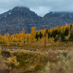 Larches and Mountains - Valley of the Ten Peaks
