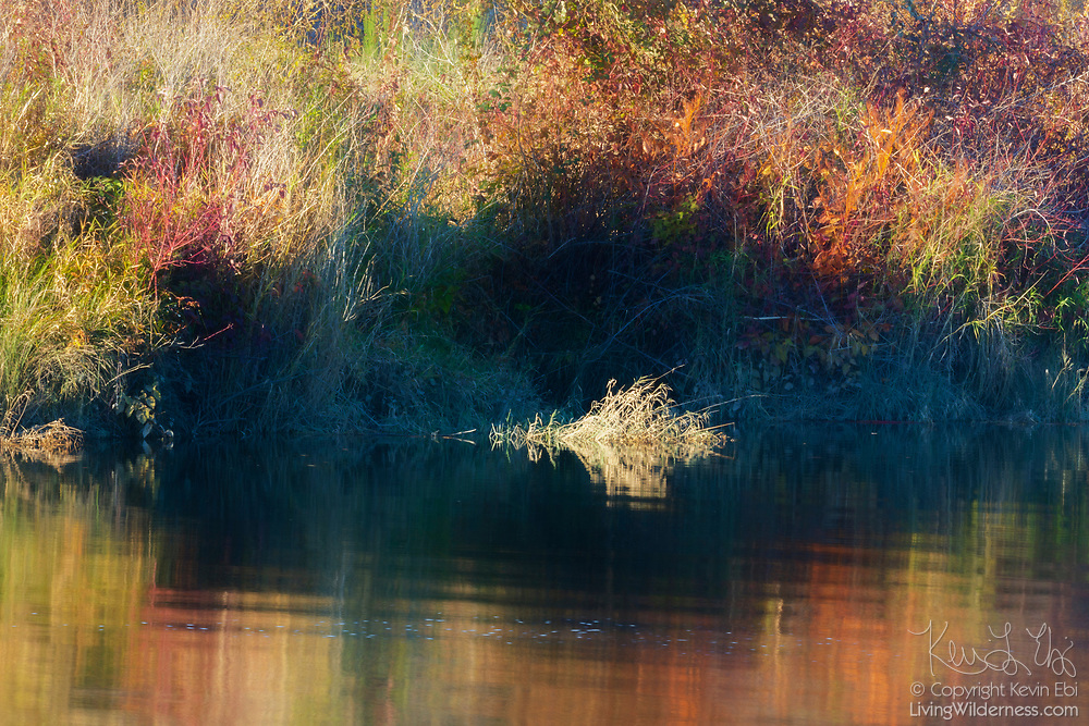 Grass and shrubs displaying autumn colors reflect on the calm water of Ebey Slough in Snohomish County, Washington.