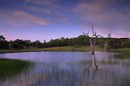 Evening light over seasonal spring pond, Isabel Valley, Santa Clara County, California