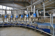 Nederland, The Netherlands, Mook, 2-4-2015Bij een melkveebedrijf worden de koeien op een moderne manier gemolken. Zij stappen in de carousel die onderdeel is van de stal, en laten zich in een paar minuten melken. De melkbekers laten automatisch los van de uier als deze leeg is. Deze koeien kunnen ook naar buiten in de wei.FOTO: FLIP FRANSSEN/ HOLLANDSE HOOGTE
