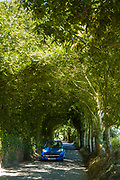 Bright blue Peugeot car, Jersey-registred with Jersey numberplate, driving along tree covered lane by Rozel in St Martin region of Jersey, Channel Isles