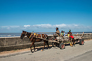Horse drawn cart<br /> Georgetown<br /> GUYANA<br /> South America