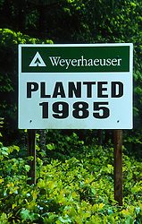 Weyerhaeuser - Planedt 1985 Sign at Site of Forest Replanting Outside of Mt. St. Helens National Volcanic Monument, Toutle, Washington, US
