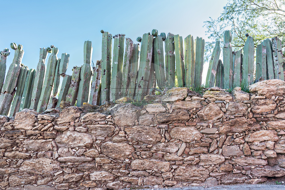 A stone wall topped with cactus as a security barrier in the ghost town of Mineral de Pozos, Guanajuato, Mexico. The town, once a major silver mining center was abandoned and left to ruin but has slowly comeback to life as a bohemian arts community.