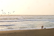 A couple walking their dog on the beach along a vigorous surf; birds fly above them.