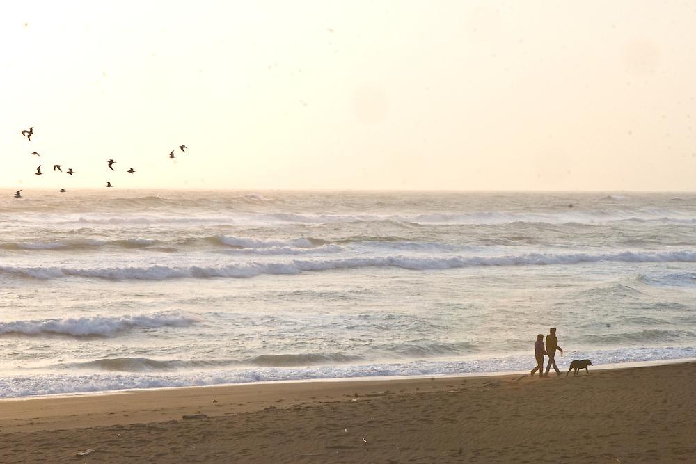 A couple walking their dog on the beach along a vigorous surf; birds fly above them.