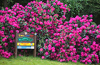 HERKENBOSCH- Tee hole 1, holebord.  Golfbaan Herkenbosch bij Roermond. FOTO KOEN SUYK