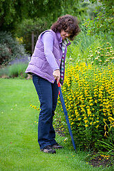 Trimming lawn edges with long handled shears