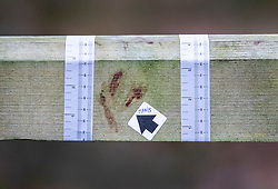 © Licensed to London News Pictures. 05/01/2019. Clandon, UK. Police evidence markers are seen surrounding blooded fingprints on a gate near West Clandon station in Surrey - where a man left the Waterloo bound train after a passenger was stabbed to death yesterday. A murder investigation has been launched after the man was attacked while on board the 12. 58pm train service travelling between Guildford and London Waterloo. A man and a woman have been detained by police in Farnham in connection with the murder. Photo credit: Peter Macdiarmid/LNP