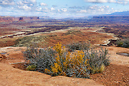 The Desert landscape of Canyonlands National Park in autumn, Utah, USA