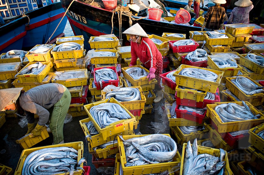 Vietnamese fishermen unload their catch over a harbour. Khanh Hoa area, Vietnam, Asia. A huge amount of plastic trays full of fish are lined up in the port.