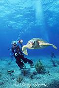 underwater photographer Bob Cranston films loggerhead sea turtle, Caretta caretta, Bahamas ( Atlantic )