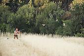 Hungarian Partridge Hunting Stock Photos