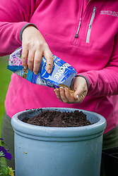 Planting up a container of summer bedding plants. Measuring amount of compost by using a 1 litre pot to fill then calculating how much slow release fertiliser to add