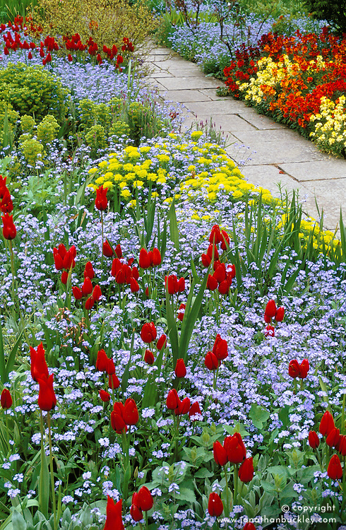 Tulip 'Red Georgette' with forget-me-nots, euphorbia and wallflowers in the barn garden at Great Dixter