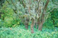 Riverine forest, Duna Drava National Park, Mohacs, Hungary