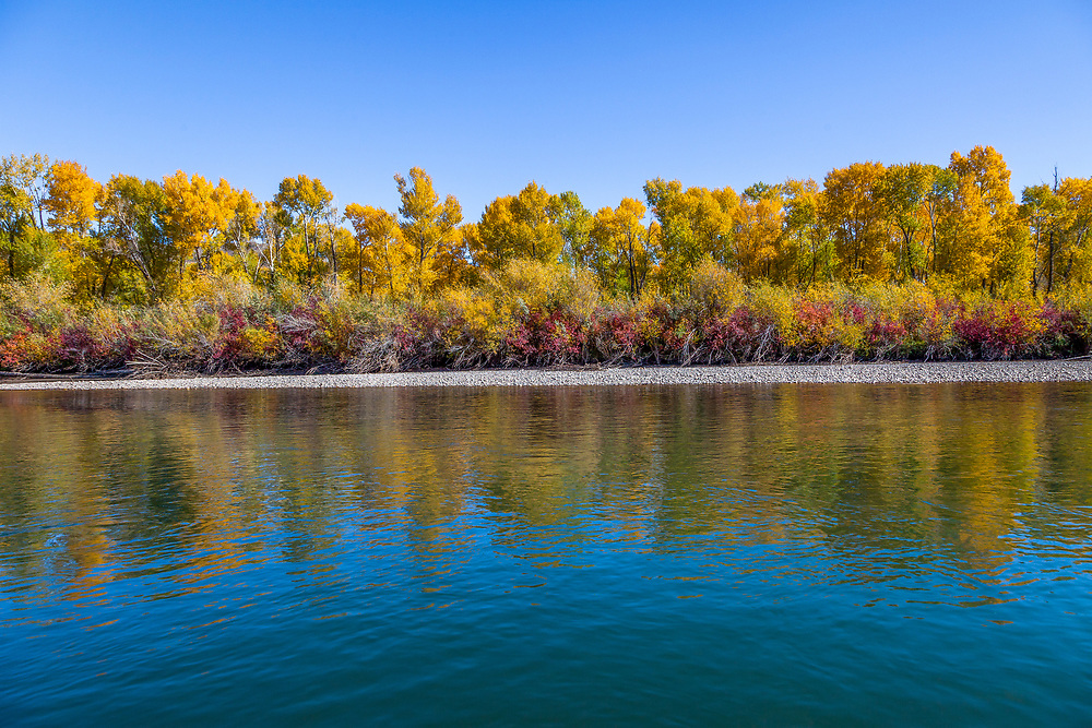 South Fork Fall Colors and river rock sand bar with blue sky on the Snake River near Ririe Idaho.<br /> Licensing and Open Edition Prints