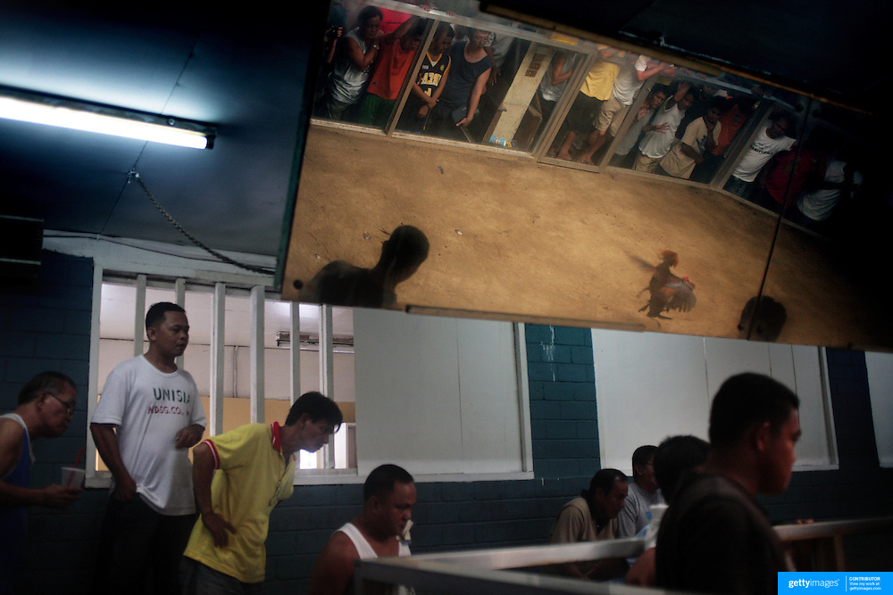 THE PHILIPPINES (Manila). 2009. Gamblers watch as two game cocks fight to the death in a small side arena at the La Loma Cockpit, La Loma, Manila. Photo Tim Clayton <br /> <br /> Cockfighting, or Sabong as it is know in the Philippines is big business, a multi billion dollar industry, overshadowing Basketball as the number one sport in the country. It is estimated over 5 million Roosters will fight in the smalltime pits and full-blown arenas in a calendar year. TV stations are devoted to the sport where fights can be seen every night of the week while The Philippine economy benefits by more than $1 billion a year from breeding farms employment, selling feed and drugs and of course betting on the fights...As one of the worlds oldest spectator sports dating back 6000 years in Persia (now Iran) and first mentioned in fourth century Greek Texts. It is still practiced in many countries today, particularly in south and Central America and parts of Asia. Cockfighting is now illegal in the USA after Louisiana becoming the final state to outlaw cockfighting in August this year. This has led to an influx of American breeders into the Philippines with these breeders supplying most of the best fighting cocks, with prices for quality blood lines selling from PHP 8000 pesos (US $160) to as high as PHP 120,000 Pesos (US $2400)..