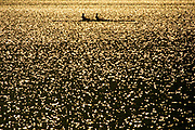 Silhouette of men's pairs rowing team in action.