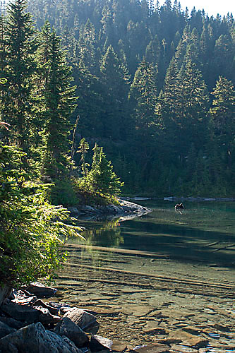 Scenic of Mowich Lake in Mount Rainier National Park, WA<br />