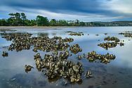 Oceania, Australia; Australian; Tasmania; Launceston, Tamar River, Paper Beach
