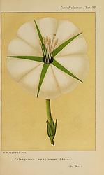Convolvulacee /<br /> Bologna :Società tipografica Azzoguidi,1887.<br /> https://biodiversitylibrary.org/page/55478413