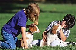 Norah & Friend With Brittany Spaniels