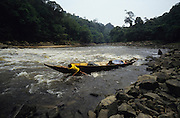 1991: Kenyah native headman/chief, Nelson, pulls his longboat upriver through rapids as he approaches Long Geng. Sarawak, Borneo<br /> <br /> Tropical rainforest and one of the world's richest, oldest eco-systems, flora and fauna, under threat from development, logging and deforestation. Home to indigenous Dayak native tribal peoples, farming by slash and burn cultivation, fishing and hunting wild boar. Home to the Penan, traditional nomadic hunter-gatherers, of whom only one thousand survive, eating roots, and hunting wild animals with blowpipes. Animists, Christians, they still practice traditional medicine from herbs and plants. Native people have mounted protests and blockades against logging concessions, many have been arrested and imprisoned.