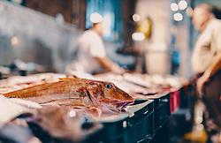THEMENBILD - Fischmarkt in der Hafenstadt, aufgenommen am 13. August 2019 in Rijeka, Kroatien // Fish market in the harbour town in Rijeka, Croatia on 2019/08/13. EXPA Pictures © 2019, PhotoCredit: EXPA/ JFK