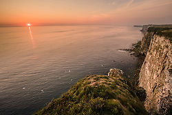 The sun rises at the RSPB nature reserve at Bempton Cliffs in Yorkshire, as over 250,000 seabirds flock to the chalk cliffs to find a mate and raise their young.