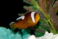 2005 - Frank's Fish