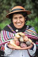 Catalina Gago<br /> Yauyos, Peru<br /> <br /> This year we only harvested a modest amount of potatoes because we were affected by the rain and drought.<br />  <br /> Native potatoes are watered only with the rain. Everything is done by hand. We don't use machines because the space on our (terraced) lands is limited. We sell native potatoes in small quantities because in order to sell in large quantities you need to have large parcels of land.<br />  <br /> We probably have about 60 varieties of native potatoes growing in our community.<br />  <br /> I love to farm when the potato flowers are blooming it is beautiful, the scent of the flowers and our black earth. We harvest barefoot so that the Terramycin in the soil enters through our feet and gives us good health. We harvest potatoes of all colors. We take our pots to the fields, and we boil them right there. Our potatoes open like roses. Sometimes we take guinea pigs to eat with our potatoes. Our native potatoes are flavorful, not like the improved varieties. Those varieties need a lot of water and a lot of medicine or else they rot.<br />  <br /> Global warming has really affected us. The land dried up before the potato plants flowered because the rains arrived late the potato didn't grow. When the rains arrived, they were harsh, and they never flowered. We now have lots of rains and lots of dry spells. When it should be raining it's dry and when we are harvesting the rains come and rot our potatoes. Then there are the frosts that inhibit our potatoes to reach their full growth potential.