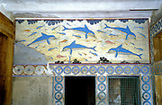 A modern copy of the ancient Minoan dolphin fresco is installed in place of the original dating from 1500 BC at Knossos palace, Heraklion (Iraklion), Crete, Greece, Europe. Knossos is a Minoan archeological site associated with the Labyrinth and Minotaur of Greek mythology. The Bronze Age palace of Knossos was first built around 1900 BC, destroyed by a large earthquake or foreign invaders in 1700 BC, rebuilt more grandly, then damaged several more times by earthquakes, by invasions, and in 1450 BC by the colossal volcanic eruption of Thera (modern Thira or Santorini). Invading Mycenaeans used Knossos as their capital as they ruled the island of Crete until 1375 BC. Archaeologist Arthur Evans excavated the Palace at Knossos from 1900-1905 and named the Minoan civilization of Crete after king Minos from Greek mythology. Homer's epic poems of the Iliad and Odyssey are the first Greek literature to mention Minos as a king of Knossos, Crete. Minos was son of Zeus and Europa. Every nine years Minos made King Aegeus pick seven men and seven women to go to the Labyrinth to be eaten by the Minotaur, a creature half man and half bull. After his death, legendary Minos became a judge of the dead in Hades. The vast building complex at Knossos is popularly thought to be the site of the Labyrinth, which Greek mythology says was designed by architect Daedalus with such complexity that no one could ever find its exit.